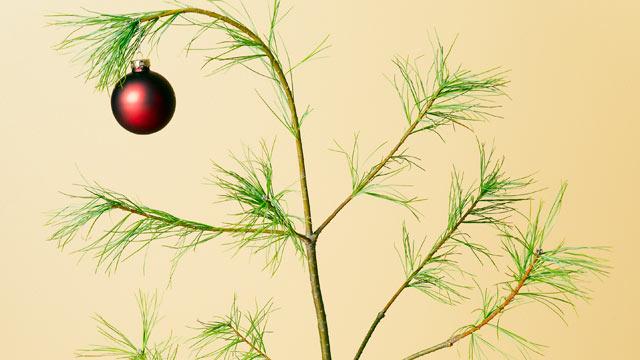 gty_sparse_christmas_tree_cc_111130_wmain